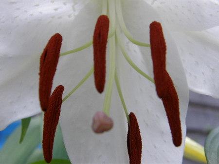 2009kasa03.JPG